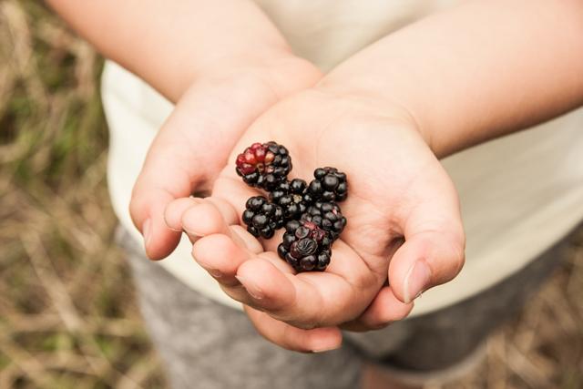 LL_Blackberry-tart_15