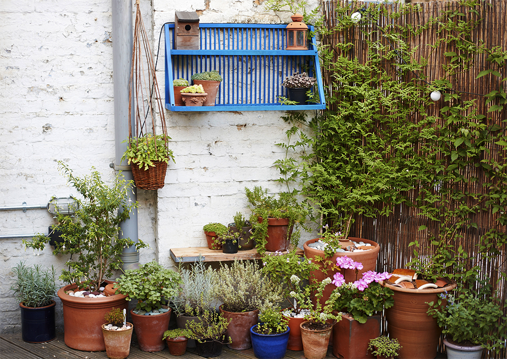 How to choose the perfect plants